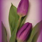 Purple Tulips by ElsT