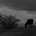 Monochrome Cow by Neill Parker