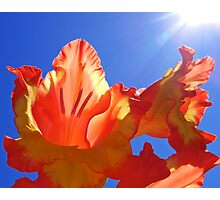 Glorious Sun Photographic Print