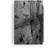 Old Fence Post Canvas Print
