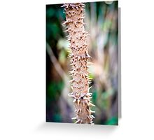 Devils walking stick (Aralia spinosa) Greeting Card
