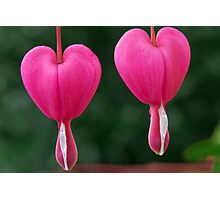 Two of Hearts Photographic Print