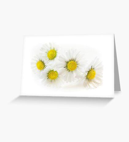 Blooming Daisies Greeting Card