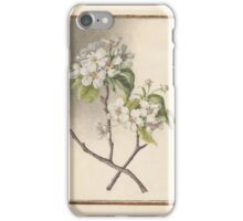 Circle of Madeleine Françoise Basseporte -Pear (Pyrus communis) iPhone Case/Skin