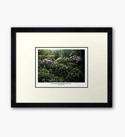Sunlight on Laurels - Thoreau Quote Poster - A Rich Man Framed Print