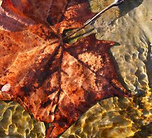 Water Leaf by Michael  Herrfurth