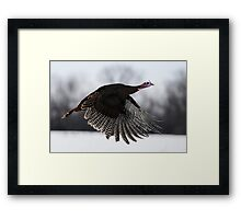 turkey taken off Framed Print