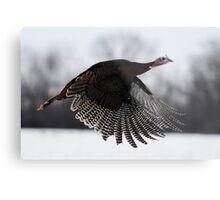 turkey taken off Metal Print