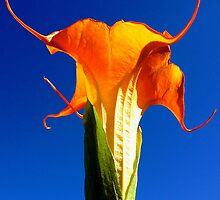 Orange Trumpet Flower by GoddessChrissy
