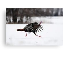 the turkey two step Canvas Print