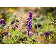 High Contrast Purple Flowers Photographic Print