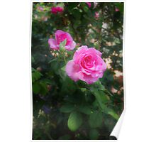 The Beauty of Roses Poster
