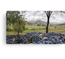 Mudgee Grapes Canvas Print