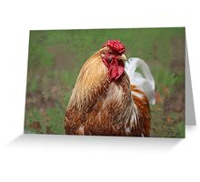King of the Roost. Greeting Card