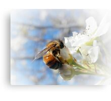 GATHERING POLLEN AND NECTAR Canvas Print