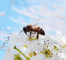 BABY BLUE AND SPRING BEE by Sandra  Aguirre