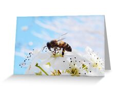 BABY BLUE AND SPRING BEE Greeting Card