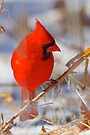 Seeking Winter Food by NatureGreeting Cards ©ccwri