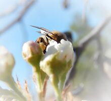 GLIMPSE OF A HONEY BEE by Sandra  Aguirre