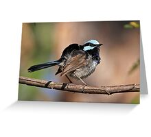 Superb Fairy-wren ~ Ruffle My Feathers Greeting Card