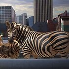 Uran zebras by Harvey Schiller