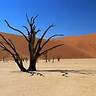 Deadvlei Camel Thorn by Jennifer Sumpton