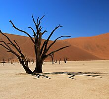Deadvlei Camel Thorn by JenniferEllen