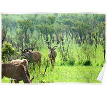THE BEAUTY OF NATURE  -  KRUGER KUDU LANDSCAPE - KRUGER KOEDOE - LANDSKAP Poster