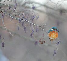 Kingfisher by Remo Savisaar