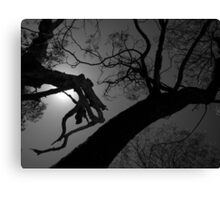Scary Trees- Silhouette in Kaiser Stuhl Conservation Park Canvas Print