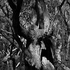 Scary Tree- The Horned One, Kaiser Stuhl Conservation Park by Ben Loveday