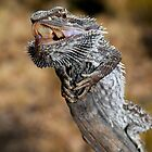 Bearded Dragon -  West McDonald Ranges  NT Oz by john  Lenagan