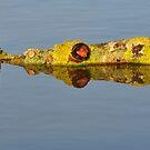 Crocodile Tree by Kasia Nowak