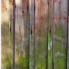 Vertical red plank wall with mold by Kristian Tuhkanen