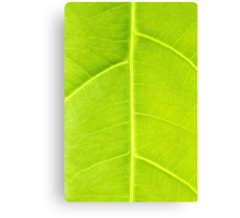 Green leaf close up nature background Canvas Print