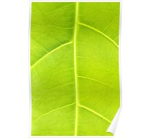 Green leaf close up nature background Poster