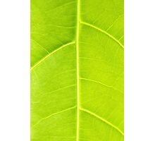 Green leaf close up nature background Photographic Print