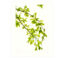 Green leaves in sunlight background Art Print