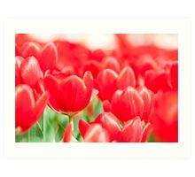 Tulip flowers in spring  Art Print