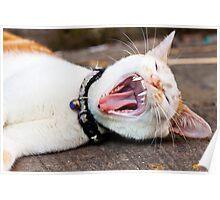 Cat yawning, close-up shot. Poster