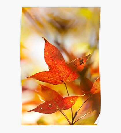 Autumn red leaves background Poster