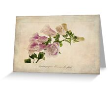 Digitalis purpurea (Common Foxglove) Greeting Card