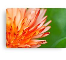 Orange flower petals, close-up shot. Canvas Print