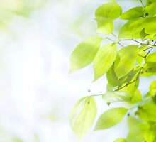 Green leaves under sunlight by kawing921