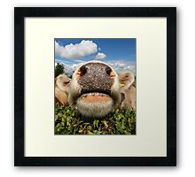 Funny Amusing Cow Framed Print