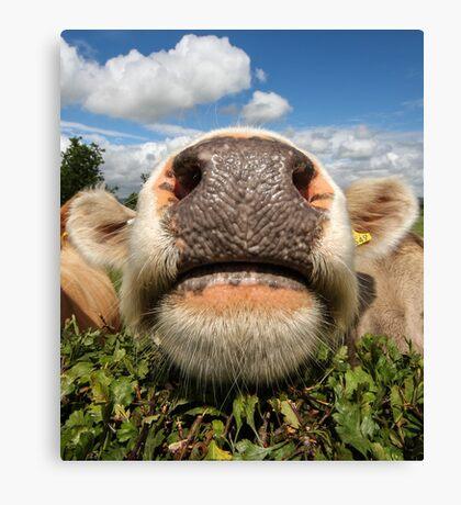 Funny Amusing Cow Canvas Print
