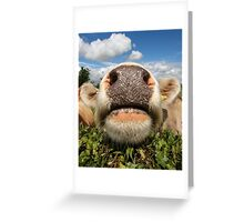 Funny Amusing Cow Greeting Card