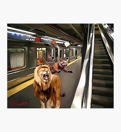 zoo ny Photographic Print