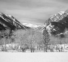 Colorado Rocky Mountain Winter Horseshoe Park BW by Bo Insogna