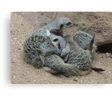 Meerkat Snuggle with Baby Canvas Print